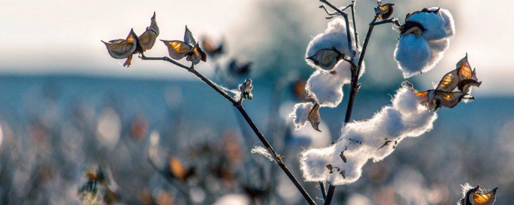 Cheaque kiest voor 100% duurzaam textiel